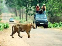 Tadoba National Park - The Land of Tigers