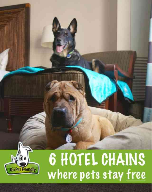 How to find best pet friendly hotels for Best hotels for pets