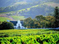 Wine Estates To Explore In Cape Town