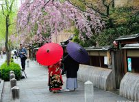 Hanami is a Japanese tradition