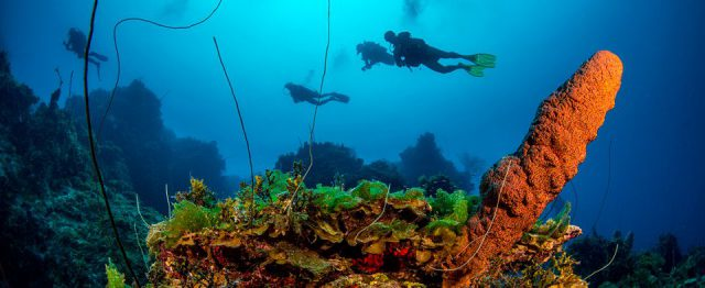 Abaco islands Sugar Wreck
