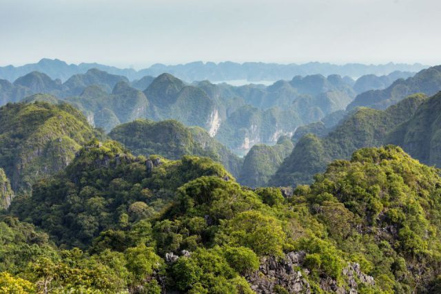 Cat Ba National Park, the best place for trekking